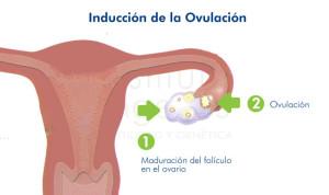 esquema-inducción-ovulación